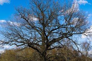 Horizontal dramatic tree crown background backdrop
