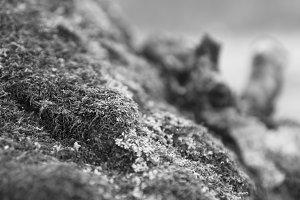 Horizontal bright black and white grass moss bokeh background ba