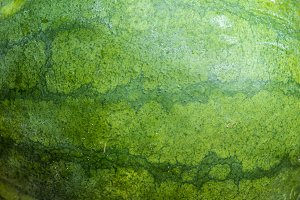 Sweet green organic watermelon background, close-up.