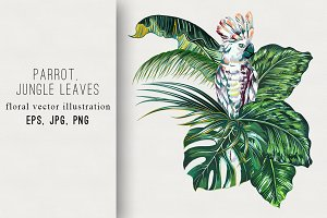 Parrot,jungle leaves illustration