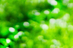 Horizontal vivid green bokeh background backdrop
