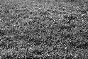 Horizontal black and white grass field bokeh background backdrop