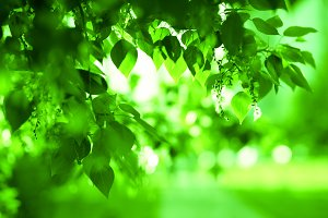 Horizontal green leaves landscape with road  background