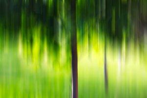 Summer tree in motion blur background