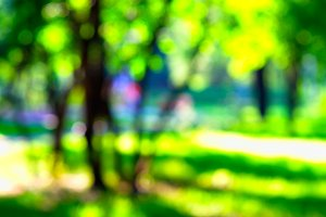Horizontal vivid park bokeh background