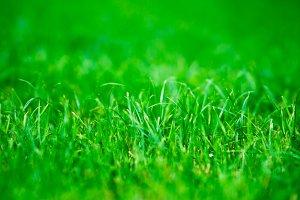 Horizontal vivid green centered grass bokeh background