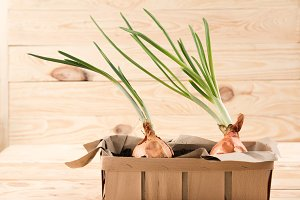 onions growing in box
