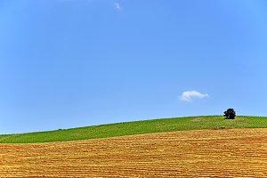 landscape after the summer harvest