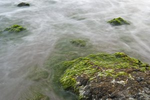sea algae and rocks