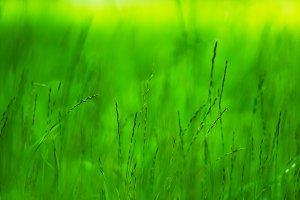 Horizontal vivid green grass bokeh background