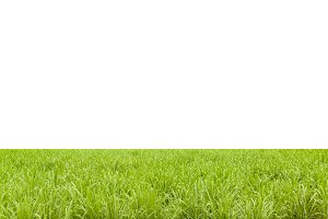 Isolated Grass Background