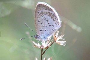 Cute butterfly in field