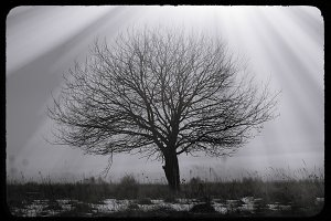 Dramatic single lone tree vintage postcard background