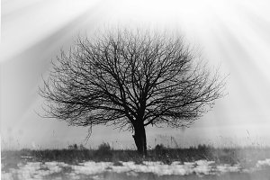 Dramatic single lone tree vignette background