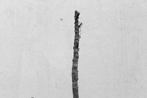 Isolated Twig