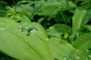 Water Drop Leaves • 1
