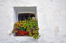 window with a pot