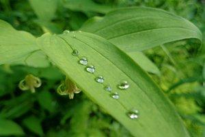 Water Drop Leaves • 2