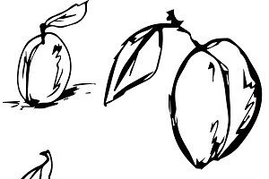 Hand drawn sketch fruits