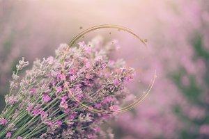 Close up of lavender, background