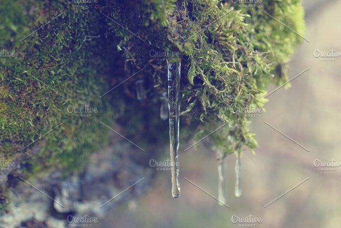 Icicles01.jpg - Nature
