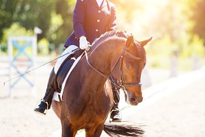 Bay horse with rider at dressage competitions