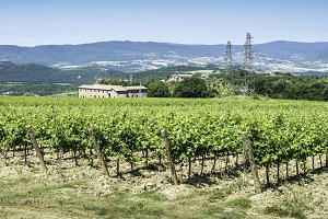 Vine plantations and farmhouse in Tu