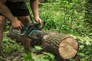 A man with a chainsaw cuts the tree