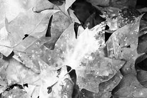 Autumn Leaves Detail Paint in White