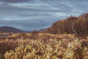 Traveling through Autumn Landscape