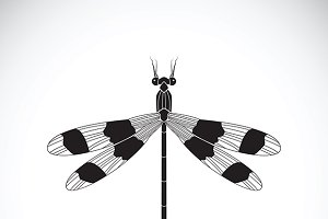 Vector of a dragonflies. Insect.