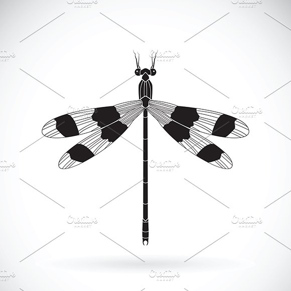 Vector Of A Dragonflies Insect