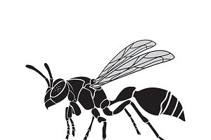 Vector of a wasp. Insect