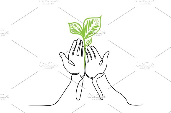 Hands Holds A Living Green Plant Seedling