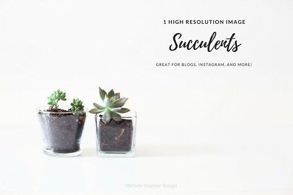 *SALE* New Succulents 2