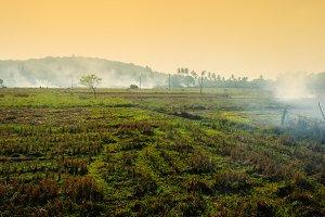 Burning plantings in Africa