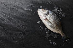 Fresh raw sea bream fish at the rock