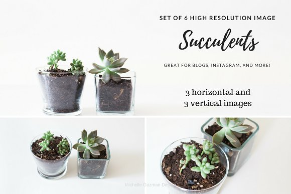 *SALE* Succulent Collection