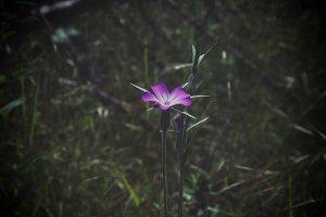 Beautiful single flower