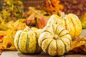 Fall or winter squash