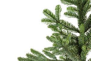 Noble fir bough