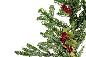 Noble fir bough with holly