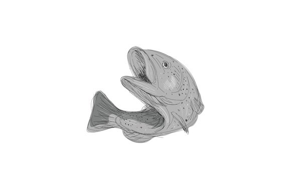 Cutthroat Trout Jumping Drawing