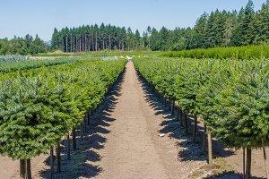 Nursery farm for ornamental shrubs