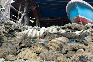 Giant ocean shells outside on the tropical island Nusa Lembongan, Indonesia, Asia, lower view.