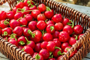 Wicker basket of red hot peppers