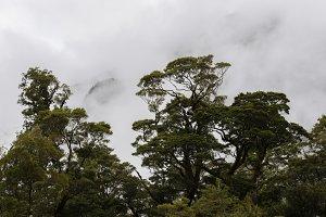 Dark Forest Scene in Clouds