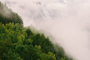 Foggy Forest Landscape in Norway