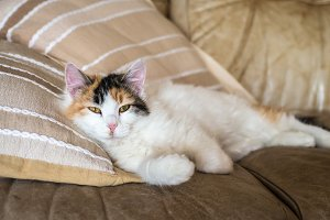 A red white cat lying on the soft sofa near a pillows