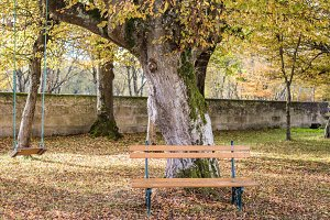 Wooden bench and swing in the autumn garden